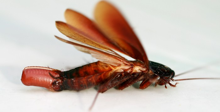Why did God Create Cock Roaches
